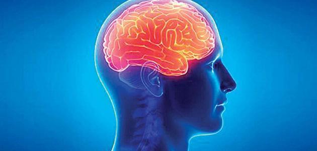 معلومات-عن-التهاب-الدماغ/