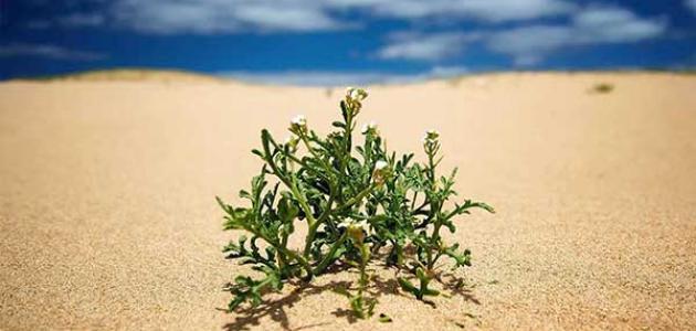نباتات تعيش في الصحراء