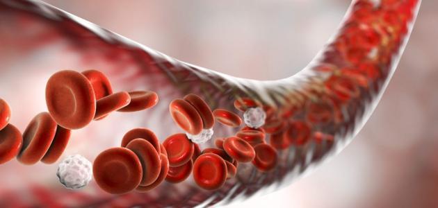 طرق تنقية الدم من السموم