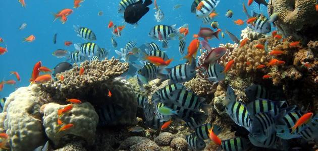 معلومات عن البحر الأحمر