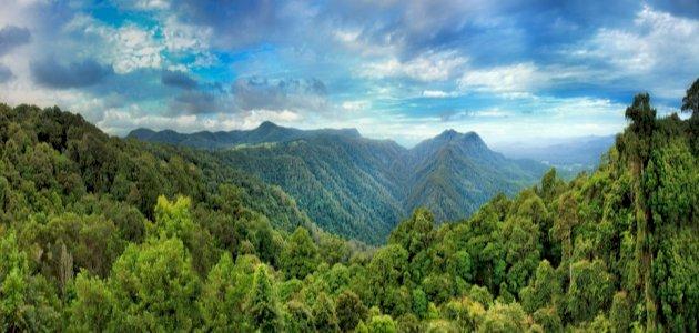 معلومات-عن-الغابات-الاستوائية/
