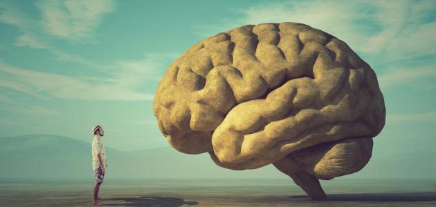 ما-هي-مكونات-الدماغ/
