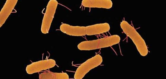 أنواع البكتيريا والأمراض التي تسببها