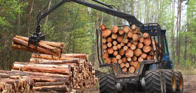 قطع الأشجار وتأثيرها على البيئة - سطور