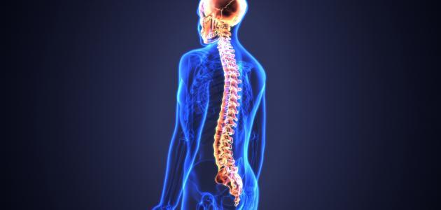 معلومات عن الجهاز العصبي المركزي