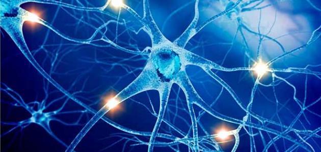 أمراض الجهاز العصبي وطرق الوقاية منها