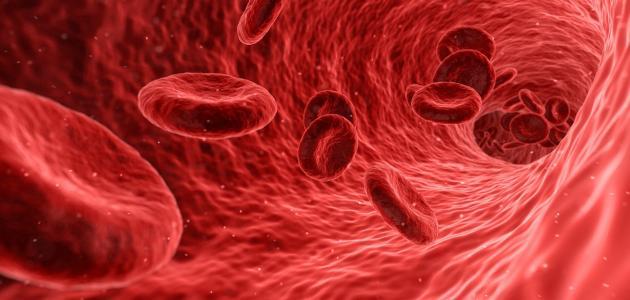 الأوعية-الدموية-وأمراضها/