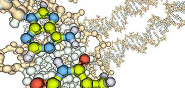 تعريف الإنزيمات وأنواعها