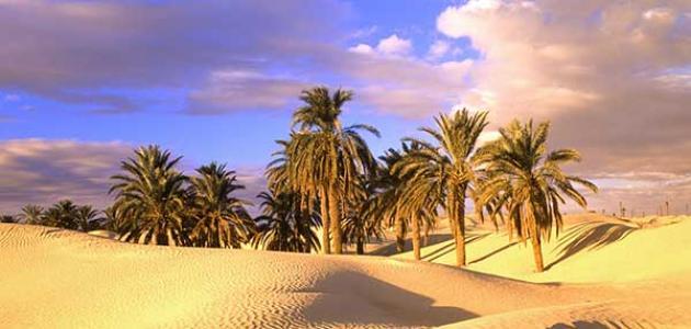 موضوع تعبير عن تعمير الصحراء