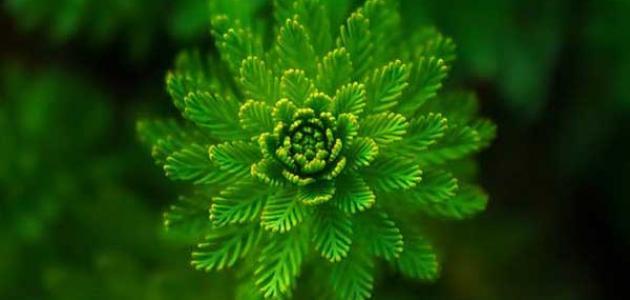 فوائد البوتاسيوم للنبات