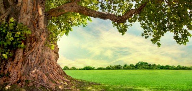 موضوع عن الشجرة وأثرها في التوازن البيئي