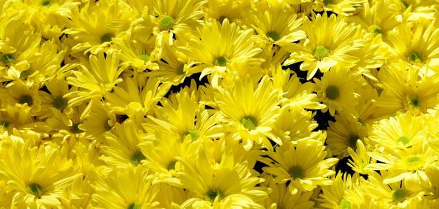 دلالة اللون الأصفر في علم النفس