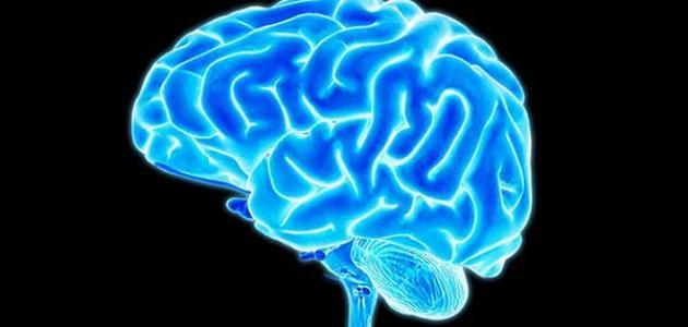 أجزاء المخ ووظائفها
