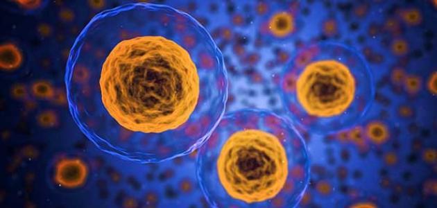 مكونات النواة في الخلية