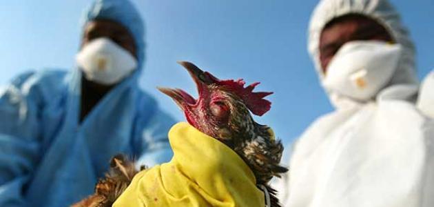 أعراض انفلونزا الطيور على الطيور