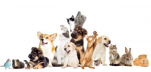 كيفية تربية حيوان أليف في المنزل