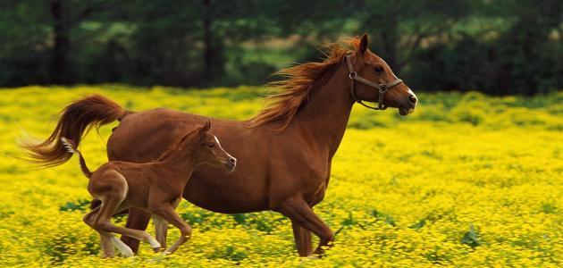 لادا بقالة قيادة انثى الحصان تسمى Myfirstdirectorship Com