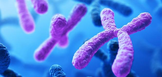وظائف الكروموسومات في الجسم - سطور
