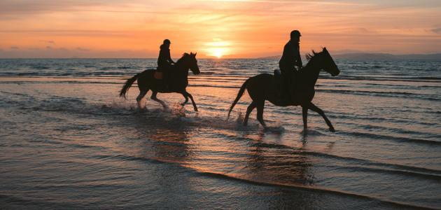 مقدار سرعة الحصان القصوى