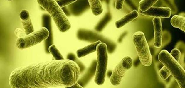 أعراض بكتيريا إي كولاي في المهبل