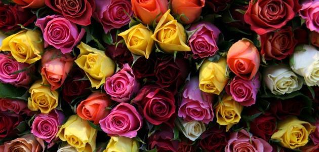 معاني ألوان الورود في علم النفس