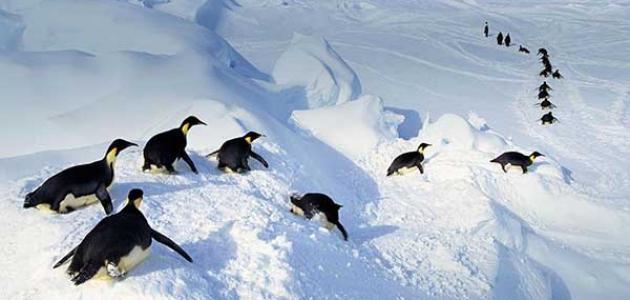 معلومات عن القطب الجنوبي