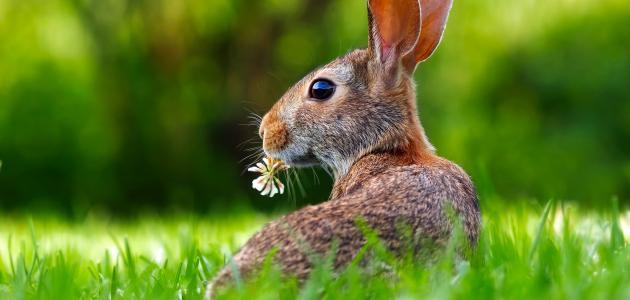 معلومات عن الحيوانات العاشبة