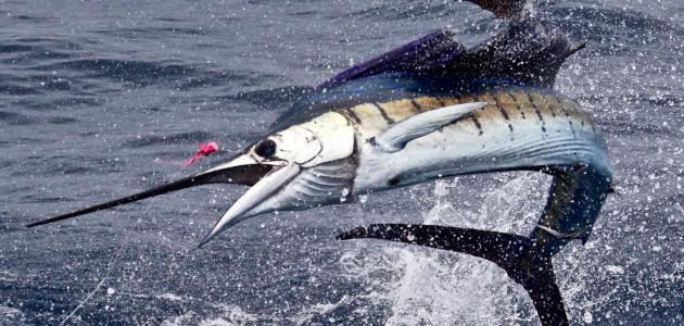 اسرع المخلوقات البحرية