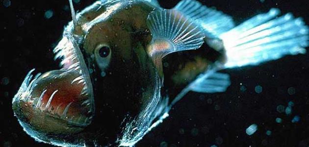 أخطر الحيوانات المائية المفترسة