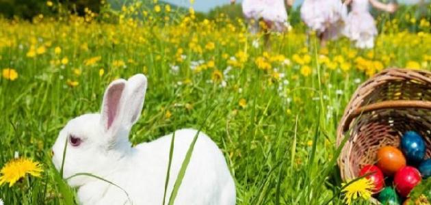 موضوع عن الربيع