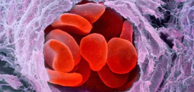 وظيفة البلازما في جسم الإنسان