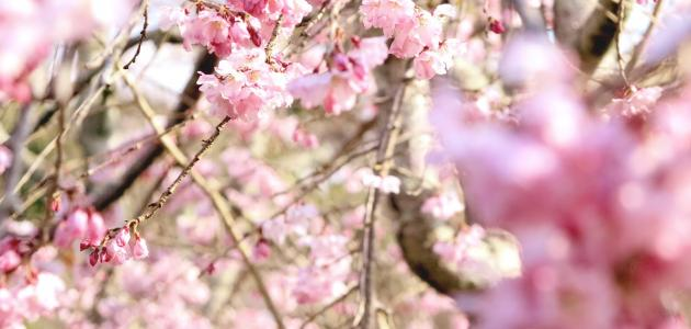 الوقاية من الحساسية الربيعية