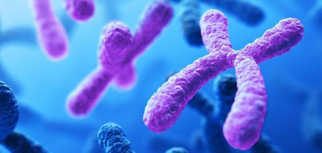 تعريف الوراثة المندلية