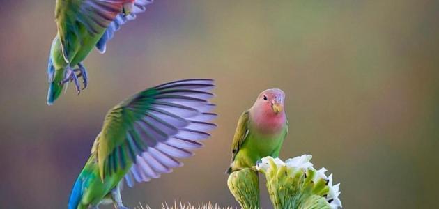 مكونات الجهاز الهضمي للطيور