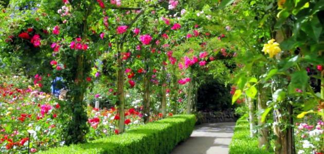موضوع تعبير عن أهمية الحدائق للصف السادس
