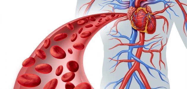 تعريف الدورة الدموية