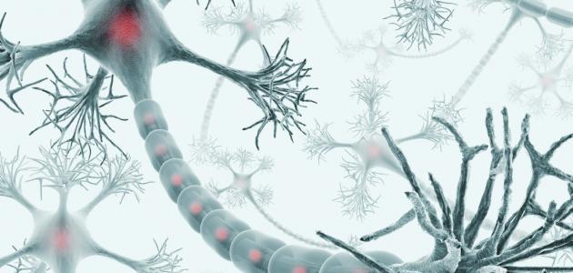 أنواع الخلايا العصبية