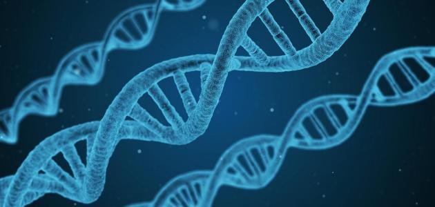 مجالات عمل تخصص هندسة الجينات