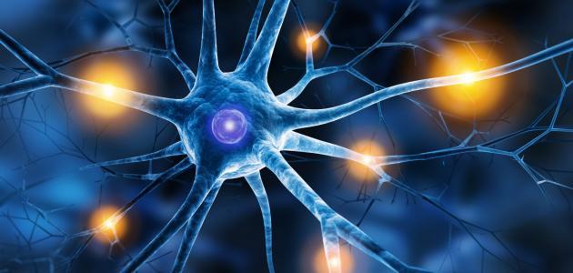 معلومات عن التهاب الأعصاب الشوكية