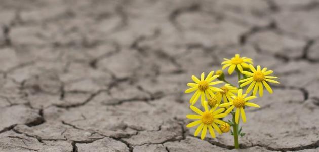 إنشاء عن الأمل