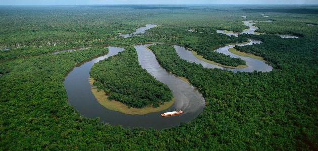 أهمية غابات الأمازون