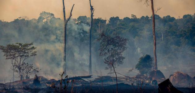 نتائج حرائق غابات الأمازون