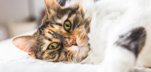 هل تنقل القطط والكلاب فيروس الكورونا المستجد