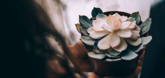 نصائح لتجهيزات عيد الفطر المبارك