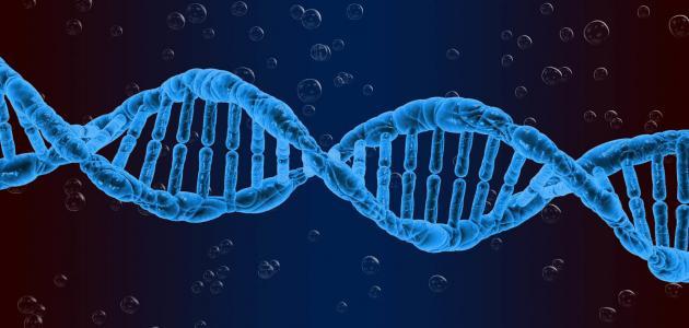 أنواع الطفرات الوراثية