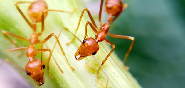 هل حقًّا هناك علاقة بين النمل والحسد