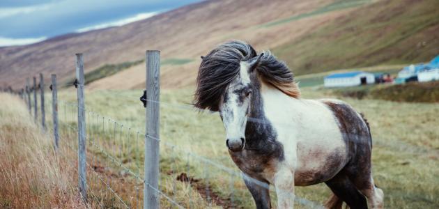معلومات عن الخيول