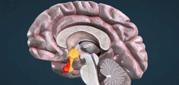 اختلالات الذاكرة