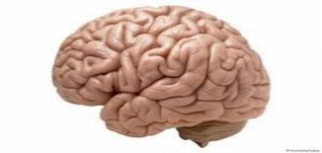 وظائف القشرة الدماغية أو المخية