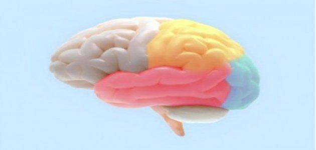 تلف القشرة المخية: الأعراض والأسباب والتشخيص والعلاج